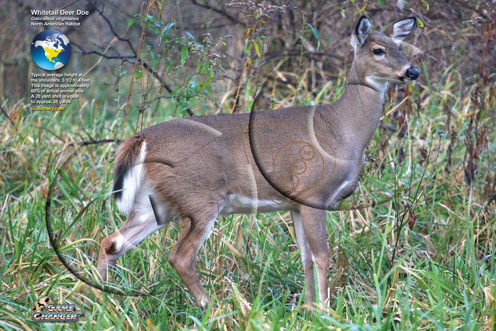 Whitetail Deer Image Roll Gc Archery Gc Archery